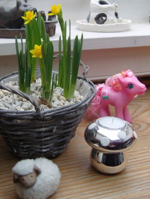 Frühling Narzissen Fensterbrett